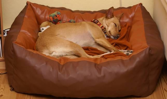 hundebett xxl 150 x110 hundekissen hundesofa hundekorb ebay. Black Bedroom Furniture Sets. Home Design Ideas